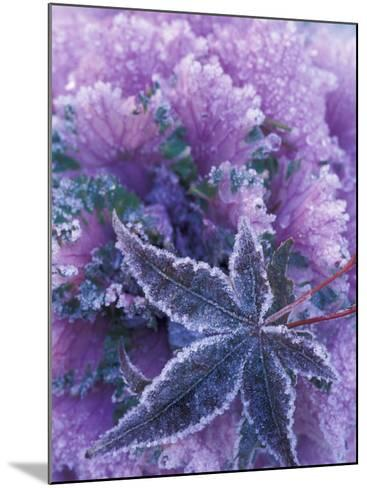 Frost-covered Shrubs and Maple Leaf, Washington, USA-Michele Westmorland-Mounted Photographic Print
