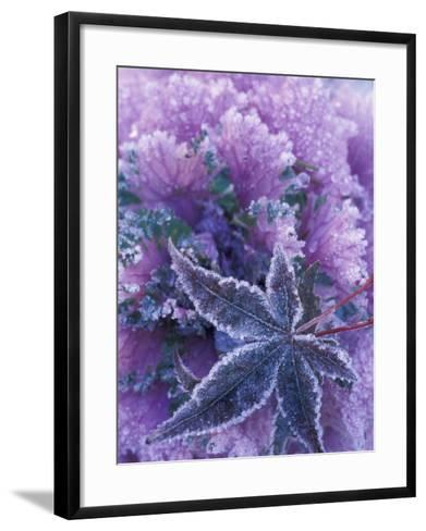 Frost-covered Shrubs and Maple Leaf, Washington, USA-Michele Westmorland-Framed Art Print