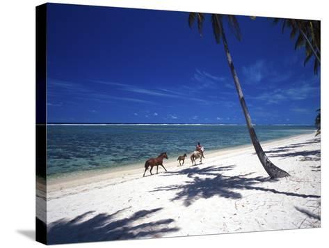 Horses on Beach, Tambua Sands Resort, Coral Coast, Fiji-David Wall-Stretched Canvas Print