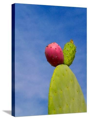 Cactus in the Desert, Peru-Keren Su-Stretched Canvas Print