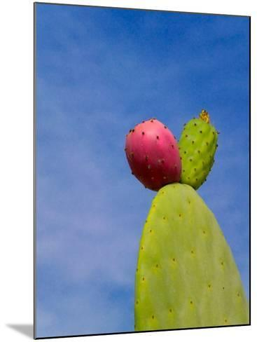 Cactus in the Desert, Peru-Keren Su-Mounted Photographic Print