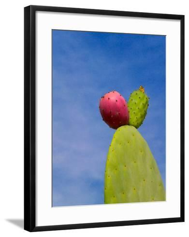 Cactus in the Desert, Peru-Keren Su-Framed Art Print