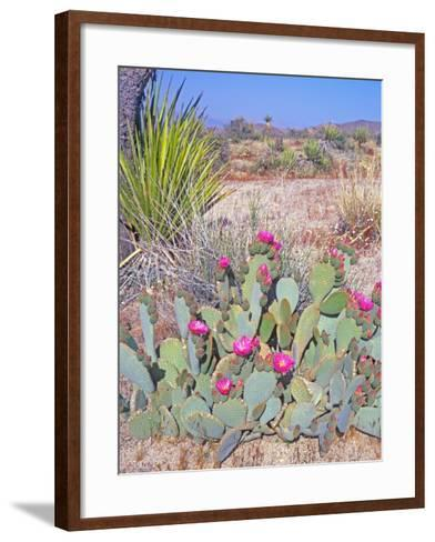 Beavertail Cactus, Joshua Tree National Park, California, USA-Rob Tilley-Framed Art Print