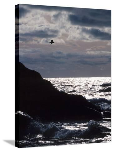 Silhouette of Seagull Flying Over Scenic Rocks and Water--Stretched Canvas Print