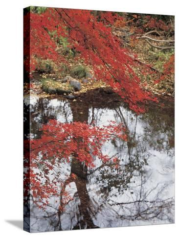Bright Red Fall Leaves with Reflection in Water--Stretched Canvas Print