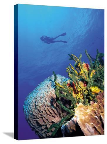 Scuba Diver Near Coral Wall, Bahamas-Shirley Vanderbilt-Stretched Canvas Print