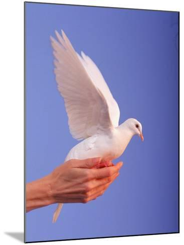 Adult Hand with White Dove-Jim McGuire-Mounted Photographic Print