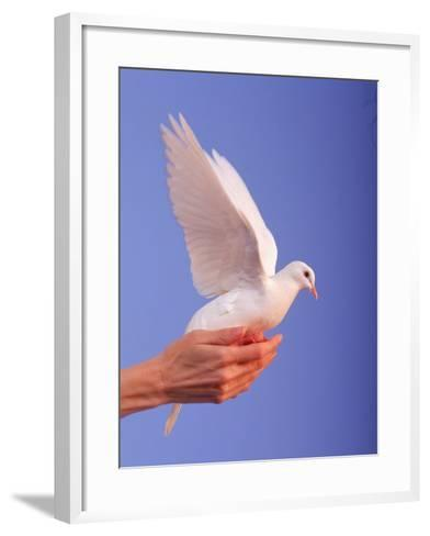 Adult Hand with White Dove-Jim McGuire-Framed Art Print