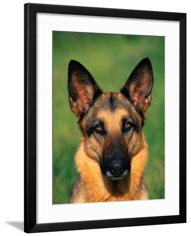 German Shepherd-Francie Manning-Framed Art Print
