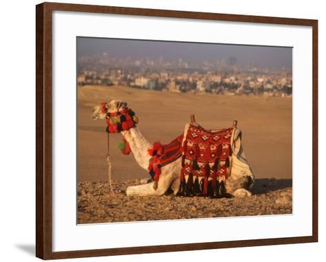 Camel Near Pyramids of Giza, Cairo, Egypt-Pat Canova-Framed Art Print