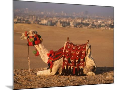 Camel Near Pyramids of Giza, Cairo, Egypt-Pat Canova-Mounted Photographic Print