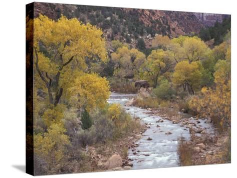 Virgin River and Fremont Cottonwoods, Zion National Park, Utah, USA-Jamie & Judy Wild-Stretched Canvas Print