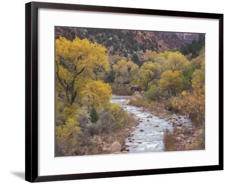 Virgin River and Fremont Cottonwoods, Zion National Park, Utah, USA-Jamie & Judy Wild-Framed Art Print