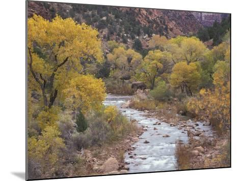 Virgin River and Fremont Cottonwoods, Zion National Park, Utah, USA-Jamie & Judy Wild-Mounted Photographic Print