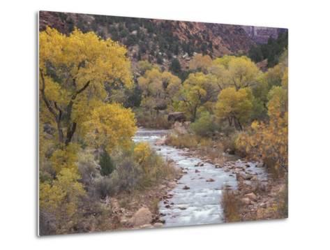Virgin River and Fremont Cottonwoods, Zion National Park, Utah, USA-Jamie & Judy Wild-Metal Print