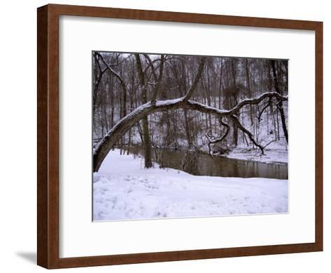 A Curved Tree Frames Rock Creek During a Winter Snow Storm-Stephen St^ John-Framed Art Print