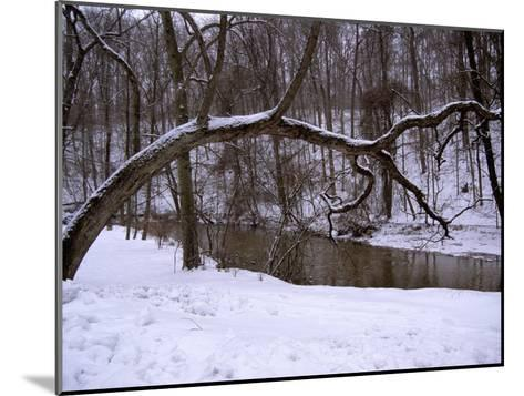 A Curved Tree Frames Rock Creek During a Winter Snow Storm-Stephen St^ John-Mounted Photographic Print