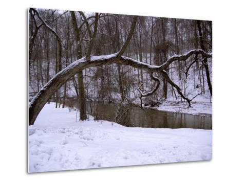 A Curved Tree Frames Rock Creek During a Winter Snow Storm-Stephen St^ John-Metal Print