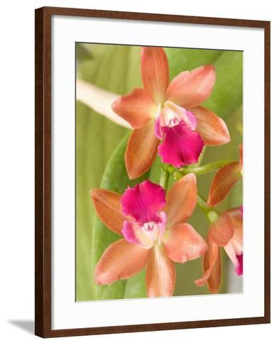 Orchid Blooms in the Spring, Thailand-Gavriel Jecan-Framed Art Print