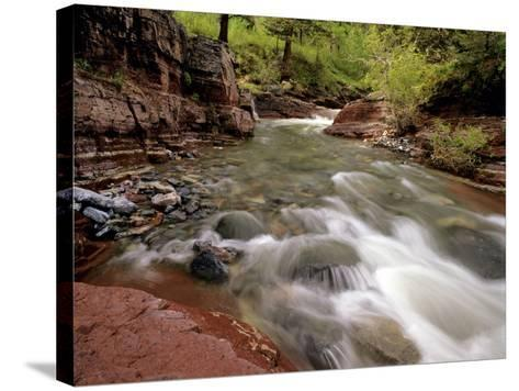 Lost Horse Creek, Wateron Lakes National Park, Alberta, Canada-Chuck Haney-Stretched Canvas Print