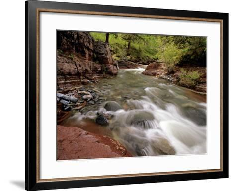 Lost Horse Creek, Wateron Lakes National Park, Alberta, Canada-Chuck Haney-Framed Art Print