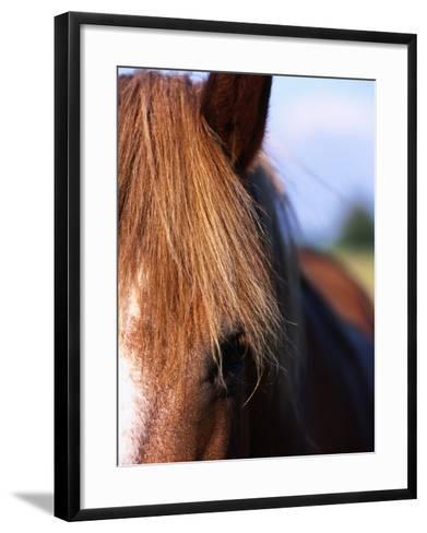 Portrait of Horse, Near Kragelund, Denmark-Holger Leue-Framed Art Print
