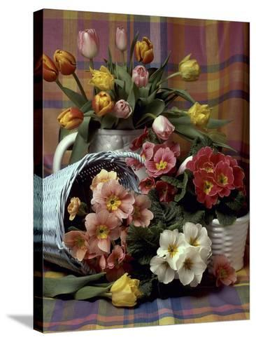 Primula and Tulipa, Vase and Basket on Ckecked Material-Erika Craddock-Stretched Canvas Print