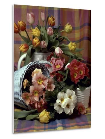 Primula and Tulipa, Vase and Basket on Ckecked Material-Erika Craddock-Metal Print