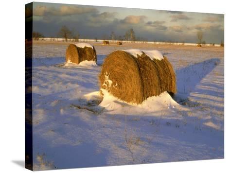 Field of Hay Rolls in Winter, Michigan, USA-Willard Clay-Stretched Canvas Print