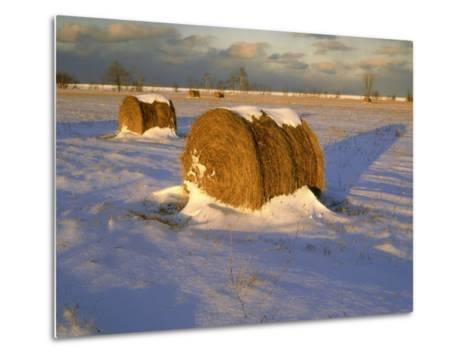 Field of Hay Rolls in Winter, Michigan, USA-Willard Clay-Metal Print