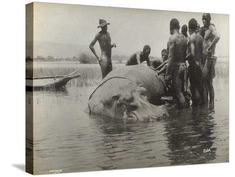 Natives During the Capture of a Hippopotamus--Stretched Canvas Print