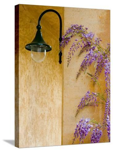 Wisteria Growing at St. Francis Vineyards and Winery, Sonoma Valley, California, USA-Julie Eggers-Stretched Canvas Print