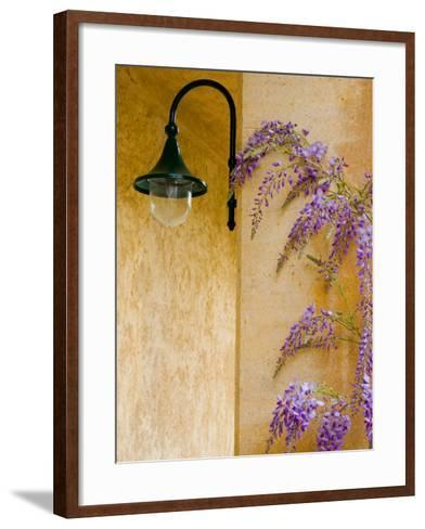 Wisteria Growing at St. Francis Vineyards and Winery, Sonoma Valley, California, USA-Julie Eggers-Framed Art Print