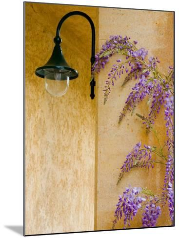Wisteria Growing at St. Francis Vineyards and Winery, Sonoma Valley, California, USA-Julie Eggers-Mounted Photographic Print