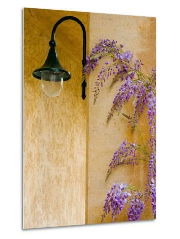 Wisteria Growing at St. Francis Vineyards and Winery, Sonoma Valley, California, USA-Julie Eggers-Metal Print