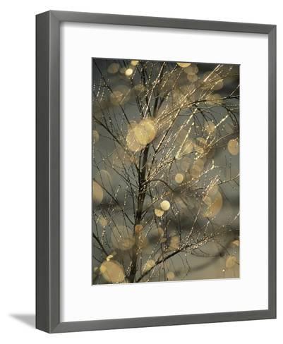The Frozen Branches of a Small Birch Tree Sparkle in the Sunlight, Waynesboro, Pennsylvania-Raymond Gehman-Framed Art Print