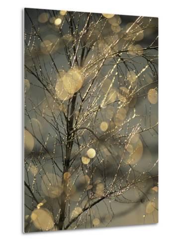 The Frozen Branches of a Small Birch Tree Sparkle in the Sunlight, Waynesboro, Pennsylvania-Raymond Gehman-Metal Print