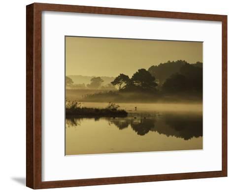 Mallard Duck Lands in a Marsh at Dawn in Chincoteague National Wildlife Refuge, Virginia-James P^ Blair-Framed Art Print