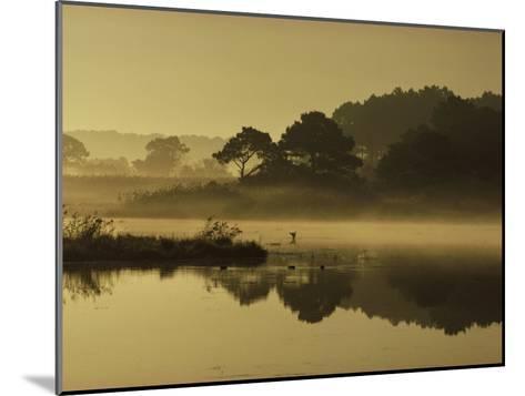 Mallard Duck Lands in a Marsh at Dawn in Chincoteague National Wildlife Refuge, Virginia-James P^ Blair-Mounted Photographic Print