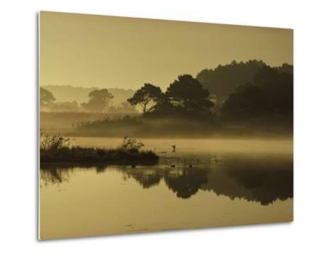 Mallard Duck Lands in a Marsh at Dawn in Chincoteague National Wildlife Refuge, Virginia-James P^ Blair-Metal Print