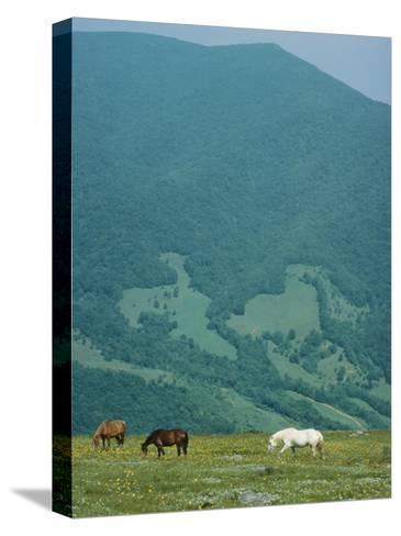 Horses Graze on Big Yellow Mountain, Appalachian Mountains, North Carolina-Sam Abell-Stretched Canvas Print
