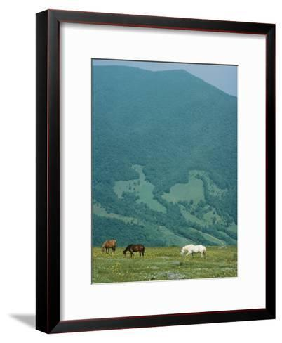 Horses Graze on Big Yellow Mountain, Appalachian Mountains, North Carolina-Sam Abell-Framed Art Print
