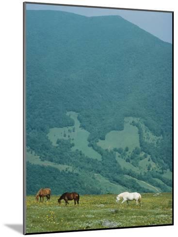 Horses Graze on Big Yellow Mountain, Appalachian Mountains, North Carolina-Sam Abell-Mounted Photographic Print