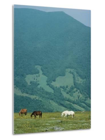 Horses Graze on Big Yellow Mountain, Appalachian Mountains, North Carolina-Sam Abell-Metal Print