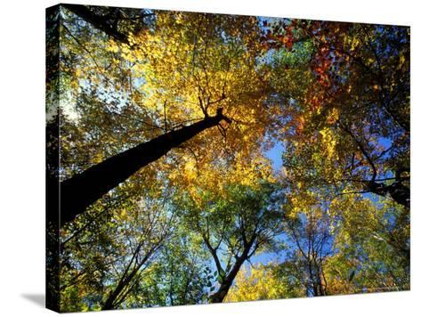 Greeley Ponds Trail, Northern Hardwood Forest, New Hampshire, USA-Jerry & Marcy Monkman-Stretched Canvas Print