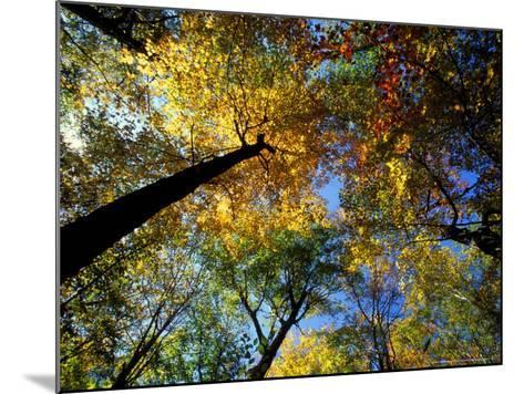 Greeley Ponds Trail, Northern Hardwood Forest, New Hampshire, USA-Jerry & Marcy Monkman-Mounted Photographic Print