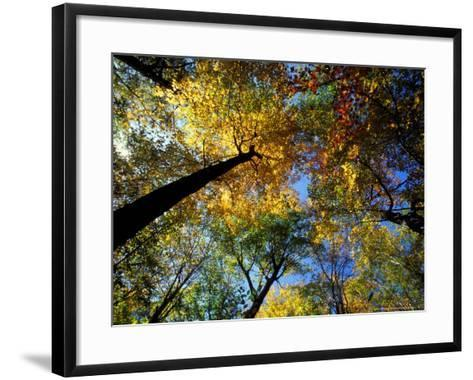 Greeley Ponds Trail, Northern Hardwood Forest, New Hampshire, USA-Jerry & Marcy Monkman-Framed Art Print