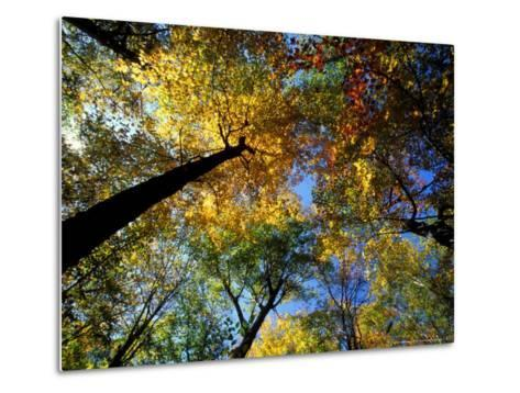 Greeley Ponds Trail, Northern Hardwood Forest, New Hampshire, USA-Jerry & Marcy Monkman-Metal Print