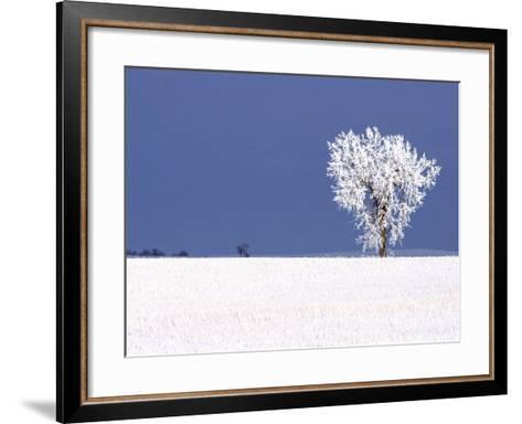 Hoar Frost Covers Tree, North Dakota, USA-Chuck Haney-Framed Art Print