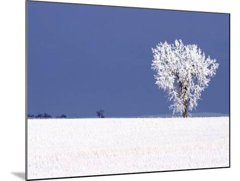 Hoar Frost Covers Tree, North Dakota, USA-Chuck Haney-Mounted Photographic Print